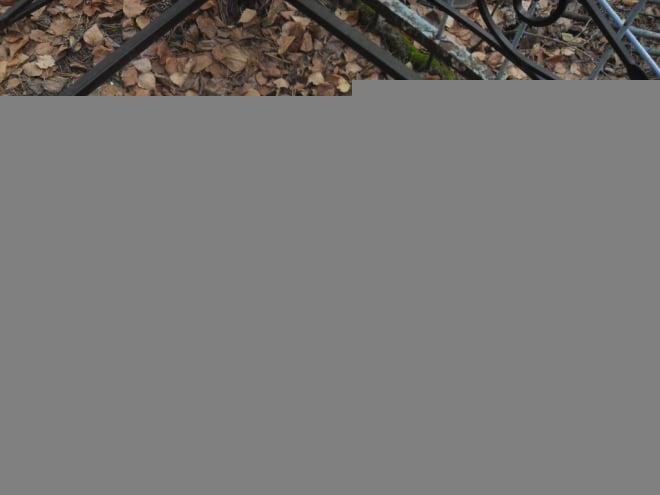 В Мордовии душевнобольную подозревают в вандализме на кладбище