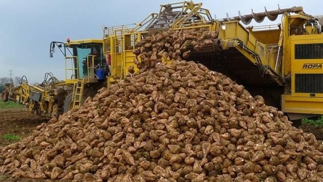 В Мордовии назвали лидеров по темпам уборки сахарной свеклы