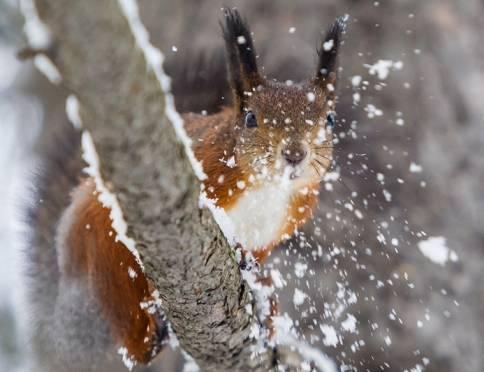 В Мордовии обещают мокрый снег и неслабый ветер