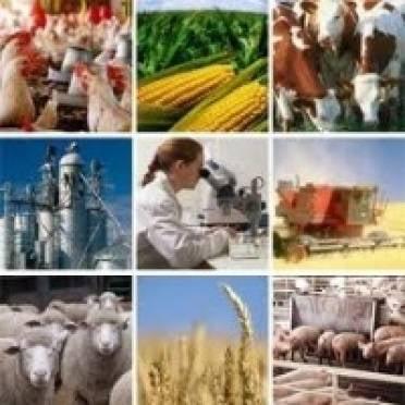 Мордовия взяла курс на создание высокотехнологичного аграрного сектора