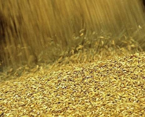 В Мордовии уже собрали более 1 миллиона тонн зерна