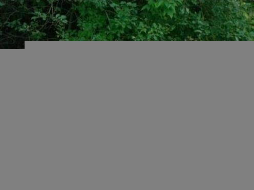 Жителям Мордовии официально запретили ходить в лес