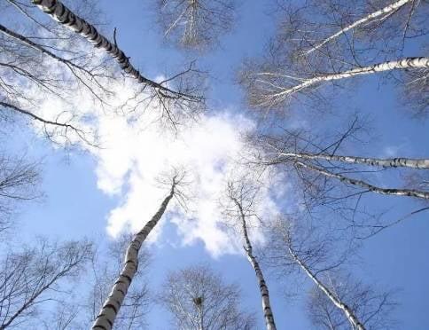 В Мордовии станет теплее