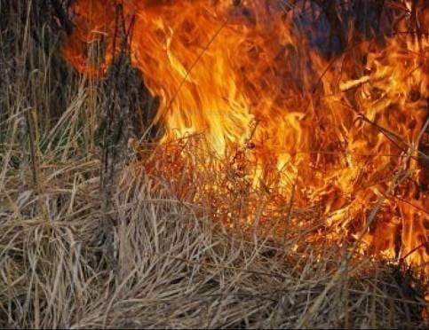 В Мордовии огонь с травы у кладбища перекинулся на пенсионерку