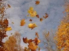 В субботу в Мордовии будет бушевать ветер