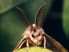 В Мордовии вредных насекомых ловят на феромоны