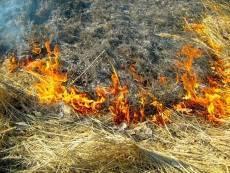 В Мордовии аномальная жара вызвала пожары
