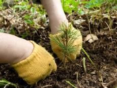 В лесах Мордовии посадят 3 млн саженцев
