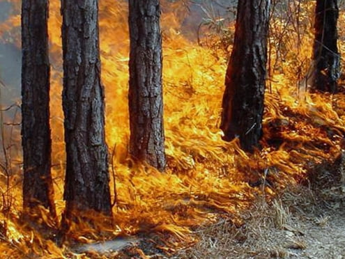 В августе Мордовию могут охватить пожары