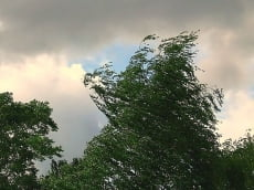 Жителям Мордовии стоит приготовиться к сильному ветру
