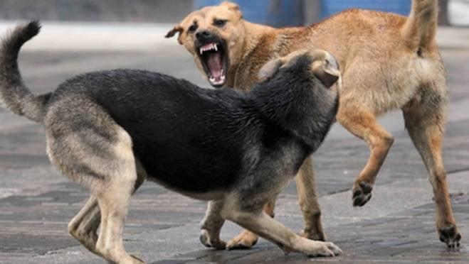 В Мордовии возбудили дело по факту нападения бродячих собак на школьников