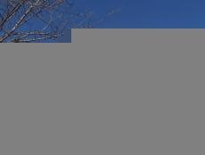 В Мордовии пешеходные переходы три дня будут под особым контролем