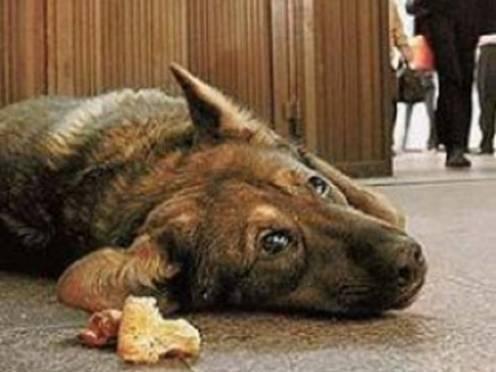 В Россельхознадзоре обеспокоены ситуацией с бездомными животными в Мордовии