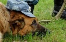 В Дубравлаге Мордовии будут разводить служебных собак