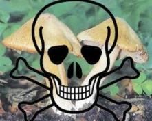 В Мордовии в «сезон грибов» отравились девять человек