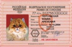 В Мордовии торгуют поддельными правами