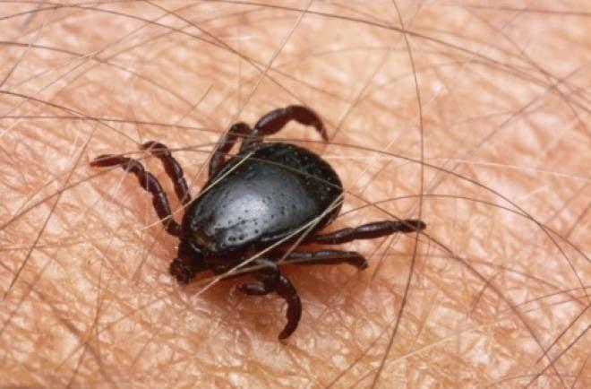В Мордовии начинается пик атаки клещей