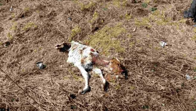Кладбище домашних животных было найдено на ферме в Ардатовском районе