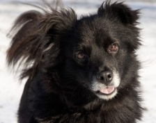 ФК «Мордовия» спас брошенную собаку