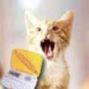 В Мордовии зафиксирован случай кошачьего бешенства