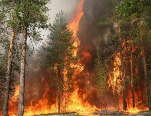 Жителей Мордовии призывают осознать высокую степень опасности пожаров в регионе