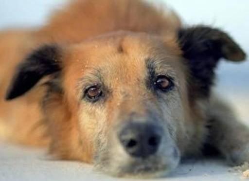 Выбрасывание домашних питомцев за дверь могут приравнять к жестокому обращению с животными