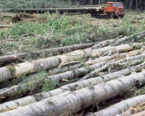 Переработкой леса в Мордовии займутся иностранцы