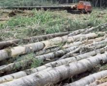 Квоты на экспорт леса-«кругляка» из Мордовии повысятся в несколько раз
