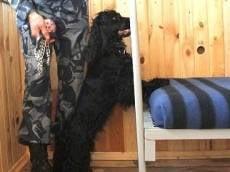 В Мордовии наркотики будут искать лабрадоры и спаниели