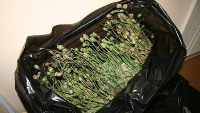 За мешок мака житель Мордовии получил 3 года «строгача»