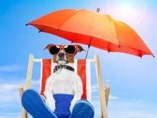 В Саранске установят шезлонги и пляжные зонтики