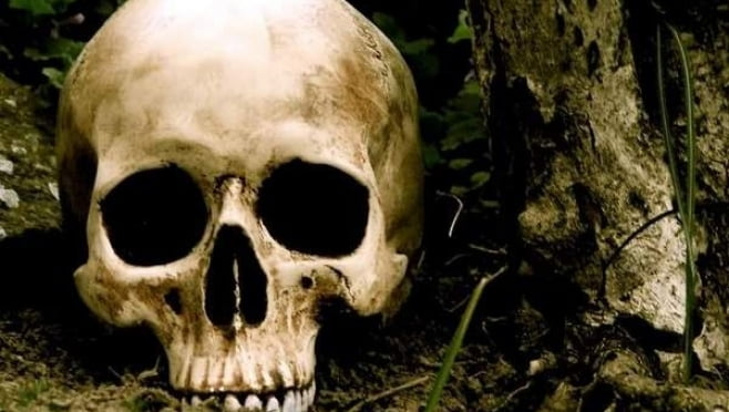 Картинки по запросу человеческий череп
