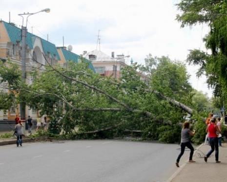 Власти Саранска намерены избавить город от всех потенциально опасных деревьев