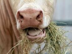 В Мордовии создадут полуторогодичный запас кормов для скота