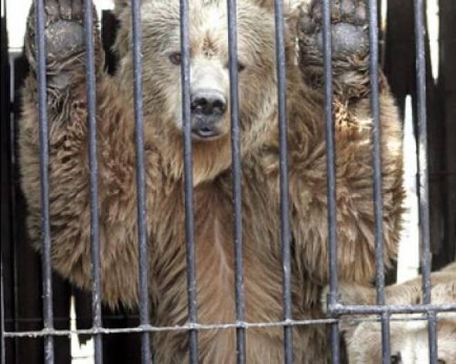 Сегодня в Саранске состоится акция в защиту животных городского зоопарка