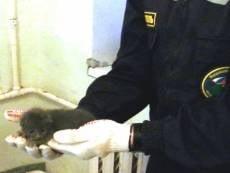 Мордовские спасатели провели спецоперацию по спасению… котенка