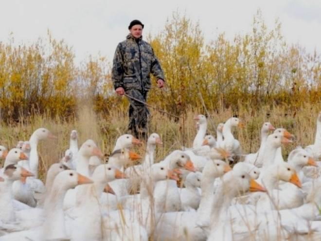Минсельхоз России оценил поддержку фермерства в Мордовии
