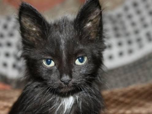 В Мордовии кошки спасли хозяина от гибели в огне