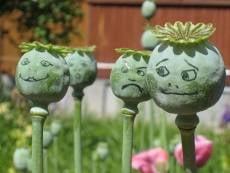 В выходные на Химмаше собрали «урожай» наркоманов