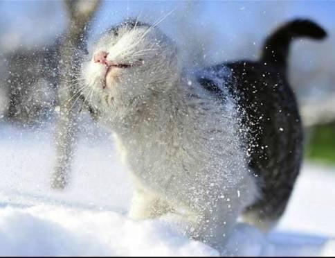 В Мордовии нанесёт ещё больше снега
