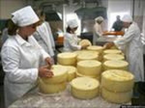 Достижения сыроделов Мордовии высоко оценили на «Зеленой неделе» в Германии