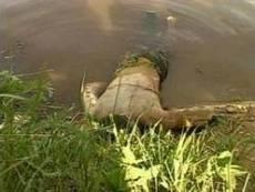 Пропавшего жителя Саранска нашли в пруду за пределами города