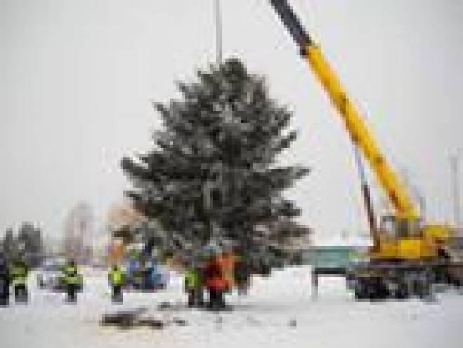В Саранск прибывает новогодняя елка