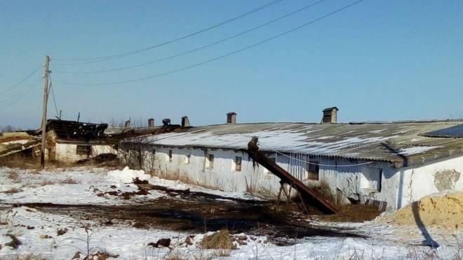 В Мордовии работники фермы спасли на пожаре 200 коров