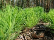 В Мордовии будет высажено 34 гектара нового леса