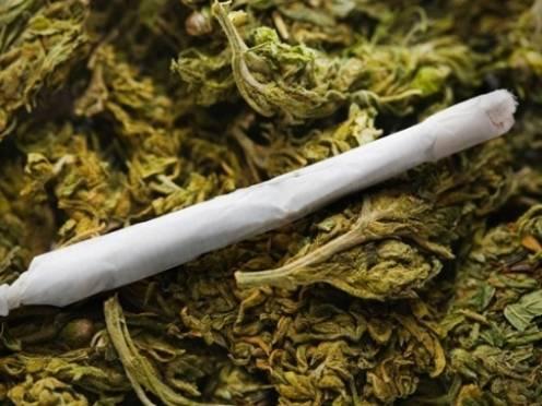 Наркополицейские Мордовии изъяли 8 кг марихуаны