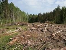 Минлесхоз Мордовии не контролирует леса региона