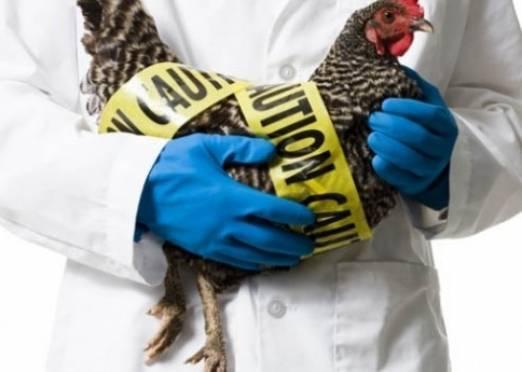 В Мордовии ищут птичий грипп