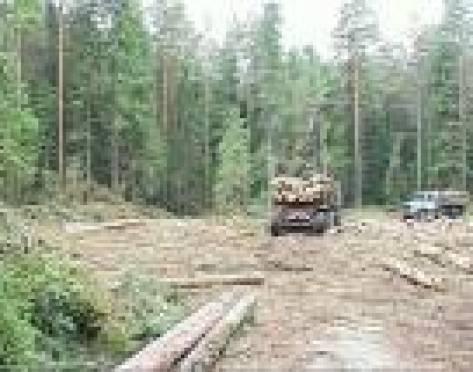 В Мордовии участились случаи незаконной рубки леса