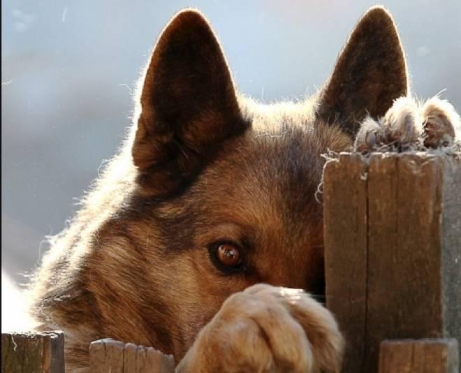 Наказание для живодёров хотят ужесточить